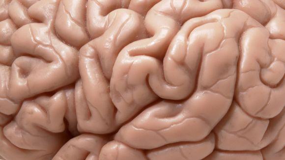 Moo-Q: определяем лучшее время работы мозга